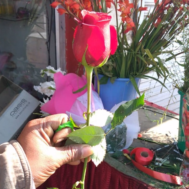 Rose Stick